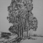 Kohlezeichnung einer Baumgruppe