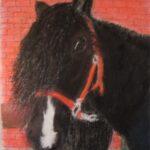 Pastellbild Pferdekopf mit Halfter